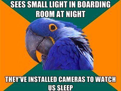 Paranoid Bird